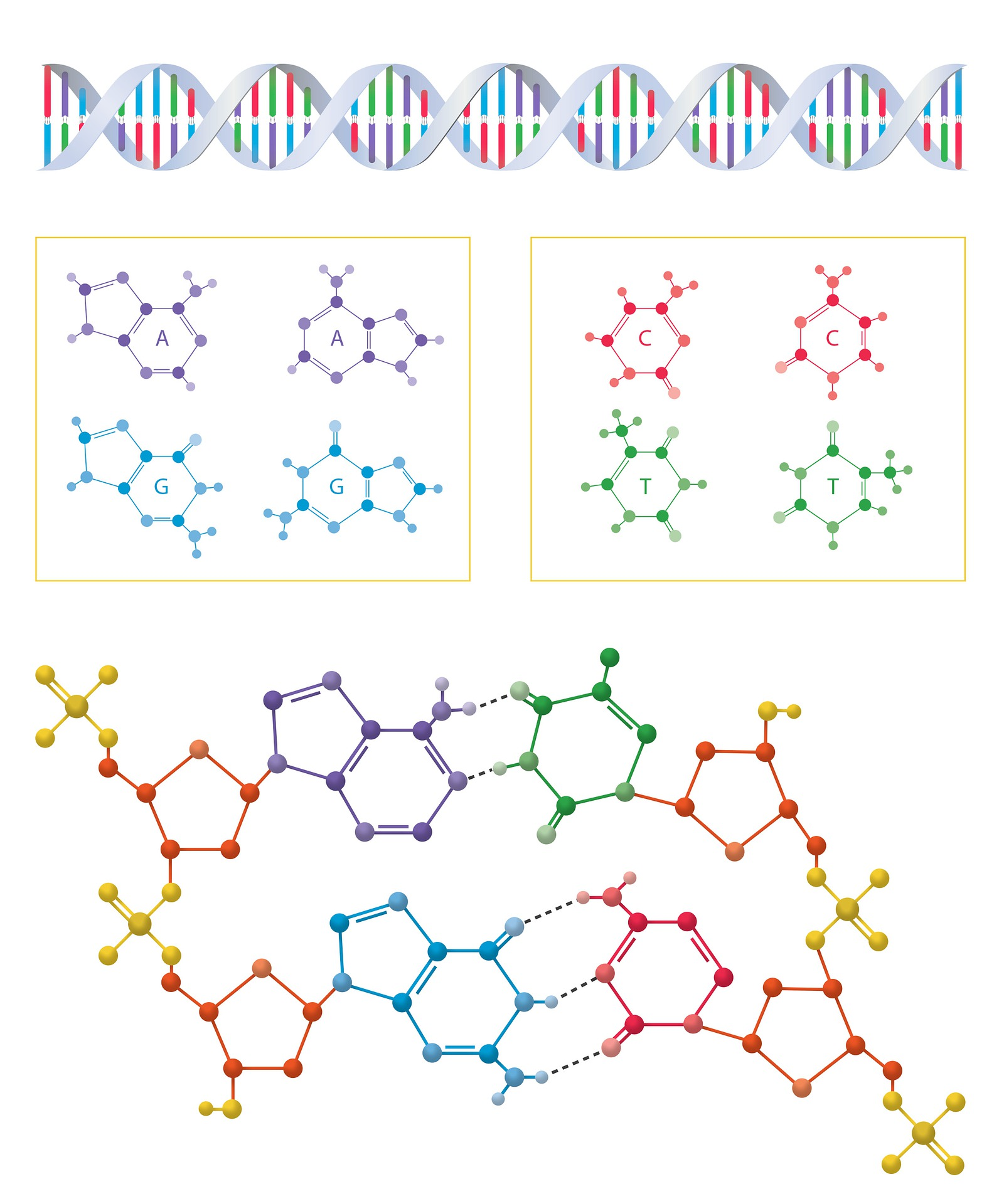 DNA and amino acid schematics.