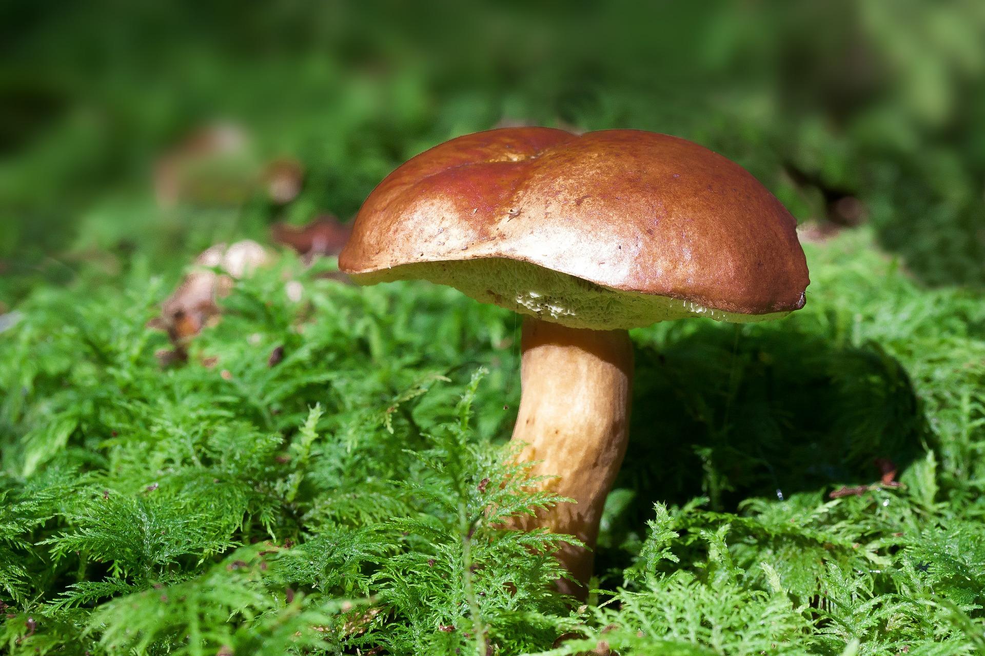 Mushroom in sunlight.